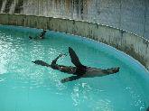 zoo a lignano